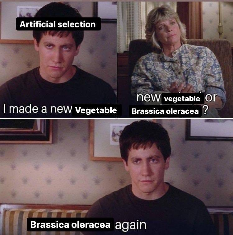 Donnie Darko meme. Panel 1: Donnie as natural selection says I made a new vegetable. Panel 2: Therapist replies New vegetable or brassica oleracea? Panel 3: Donnie replies brassica oleracea again.